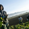 Colorado's agriculture and tourism industries need immigration reform, business leaders say