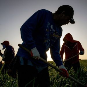 Expelling Immigrant Workers May Also Send Away the Work They Do
