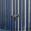 Asylum-Seekers Say Immigration Officials Are Ransoming Their Kids in Exchange for Deportation