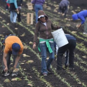 What Happens if America's 2.5 Million Farmworkers Get Sick?