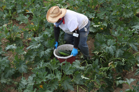 Sweeping Immigration Bills Seek To Reform Dire Farm Working Conditions