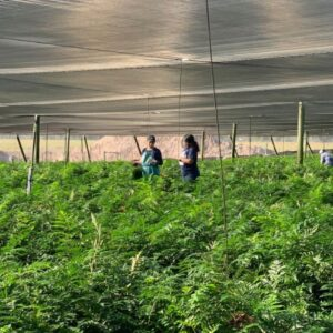 Immigration Overhaul Bill May Reform Florida Farm Working Conditions
